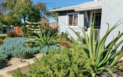 San Diego Yard Design