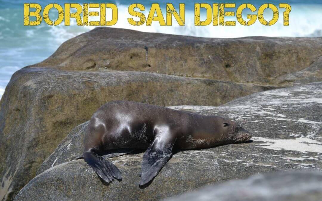 Bored San Diego
