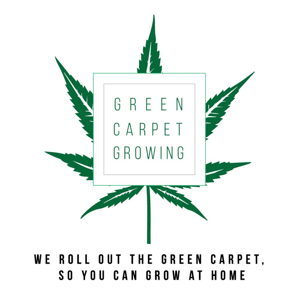 Home Grow Consultant Teaching You How To Grow Cannabis Indoors in San Diego
